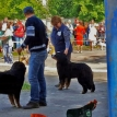12 months, 12.05.18, 2xDog Show, Orel  -  2*J.CAC, 2*Best J., 2*BOB, 2*BIG II – 2 !!! Youth Champion of Russia !! -